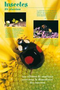 insectesexposition-3