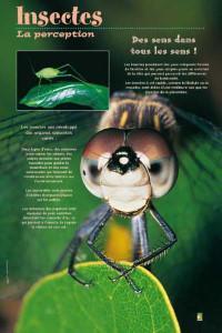 insectesexposition-4